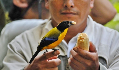 Ecuador Birdwatching and More